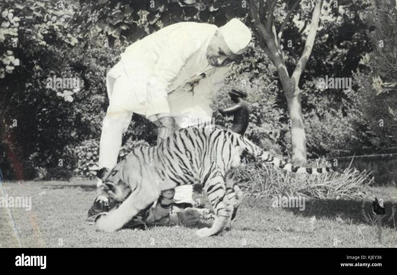 Jawaharlal Nehru with tiger cubs - Stock Image