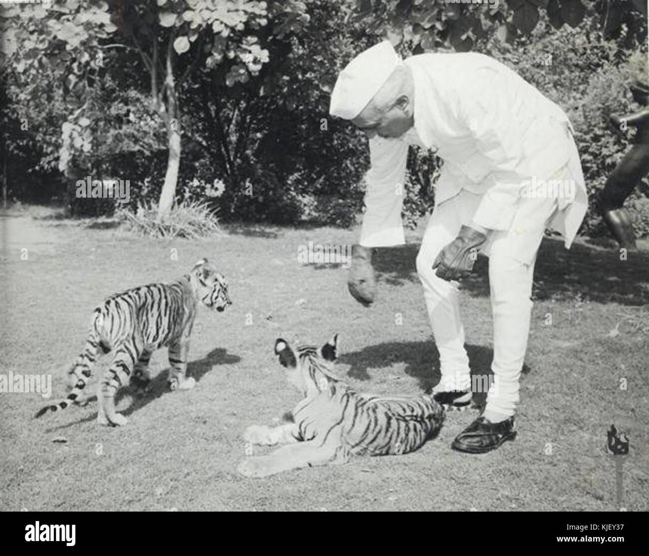Jawaharlal Nehru with Tiger cubs at Teen Murti House - Stock Image