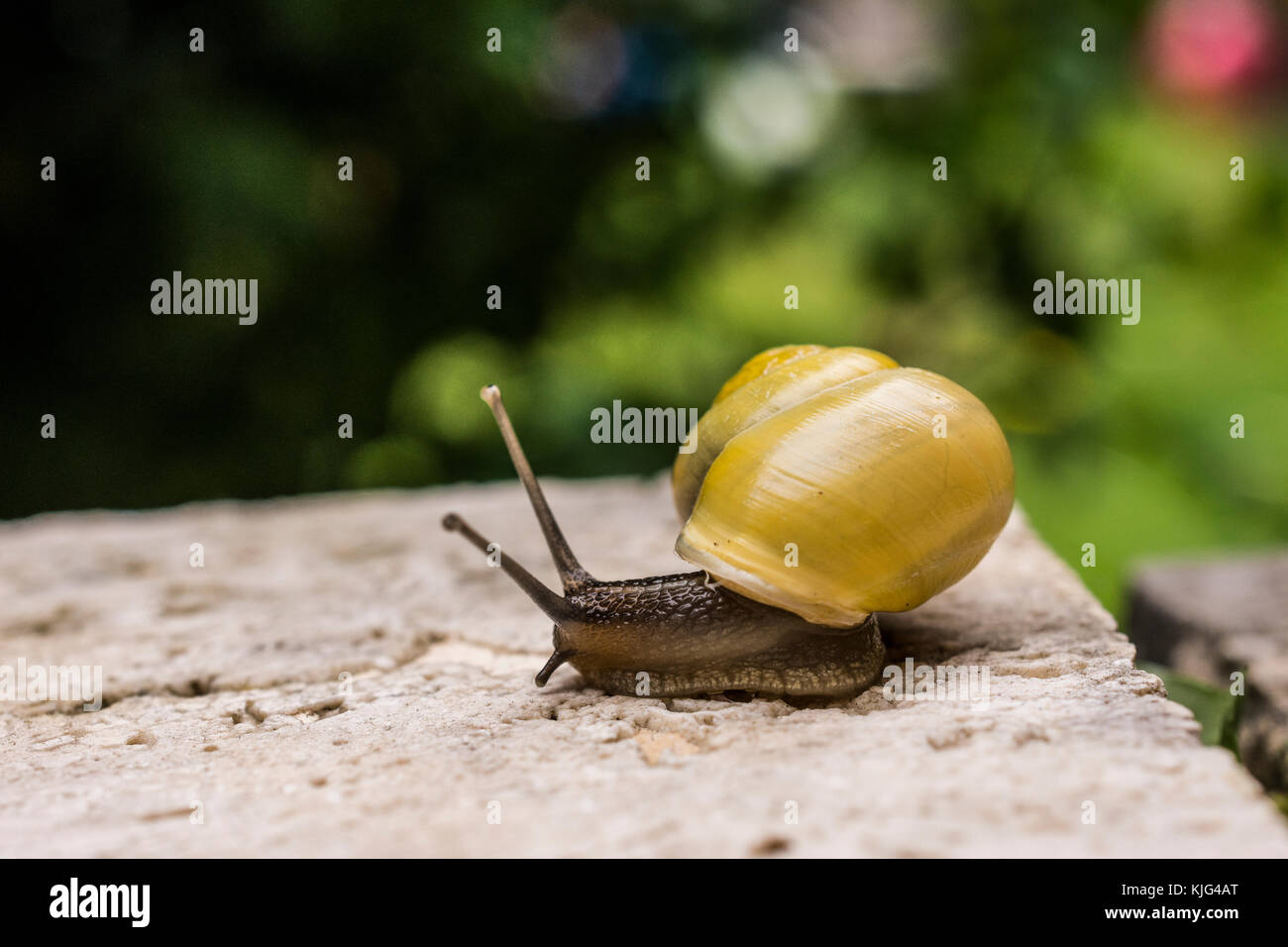 Snail macro Stock Photo