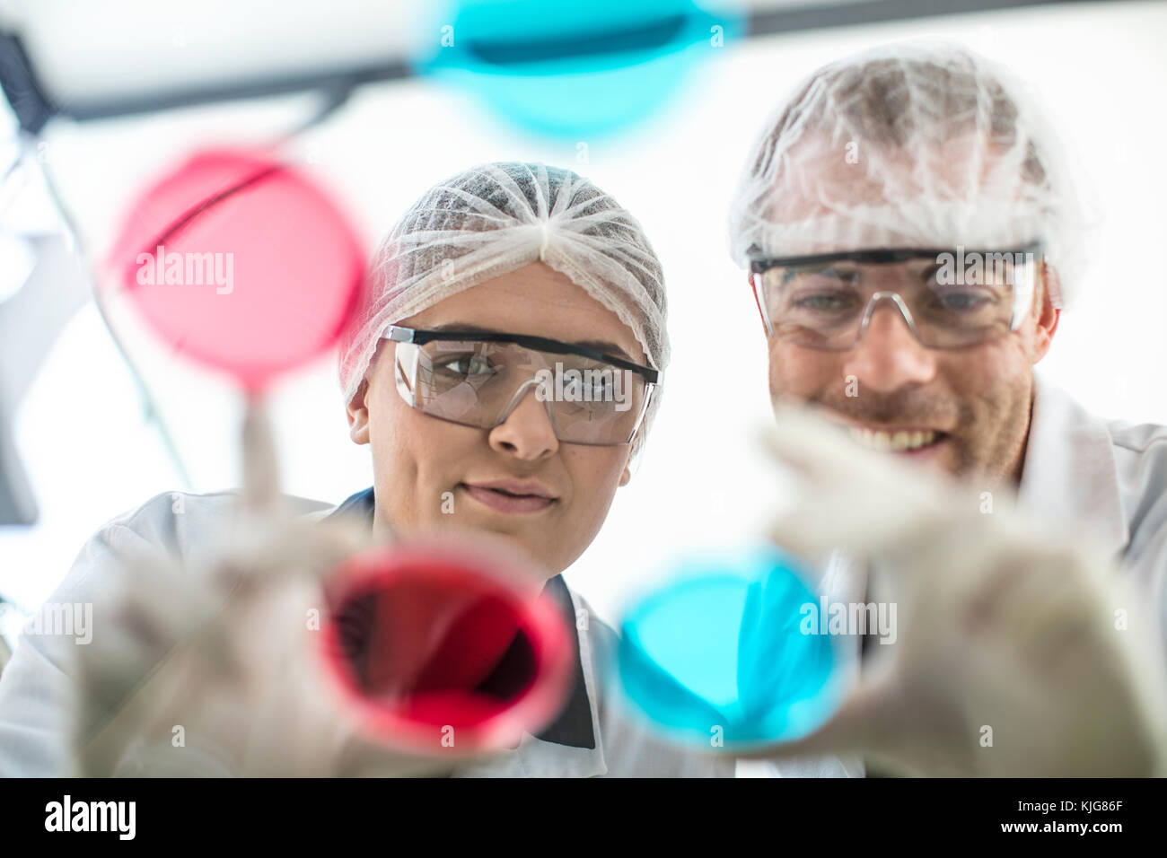 0cd44b76813 Two scientists working in lab together looking at petri dishes Stock ...