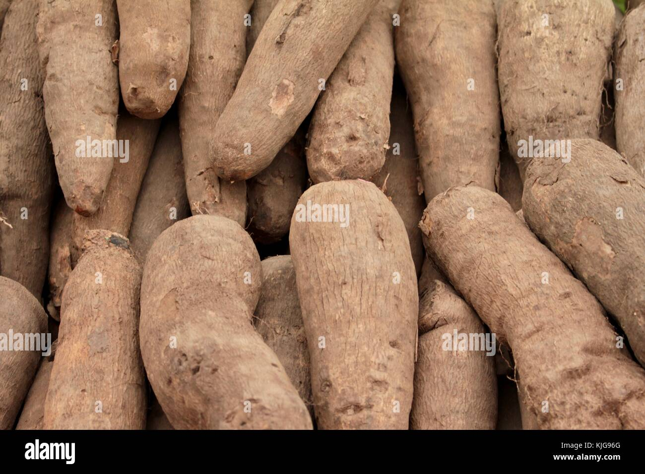 Close up on sweet potatoes on a market stall in London filling the frame - Stock Image
