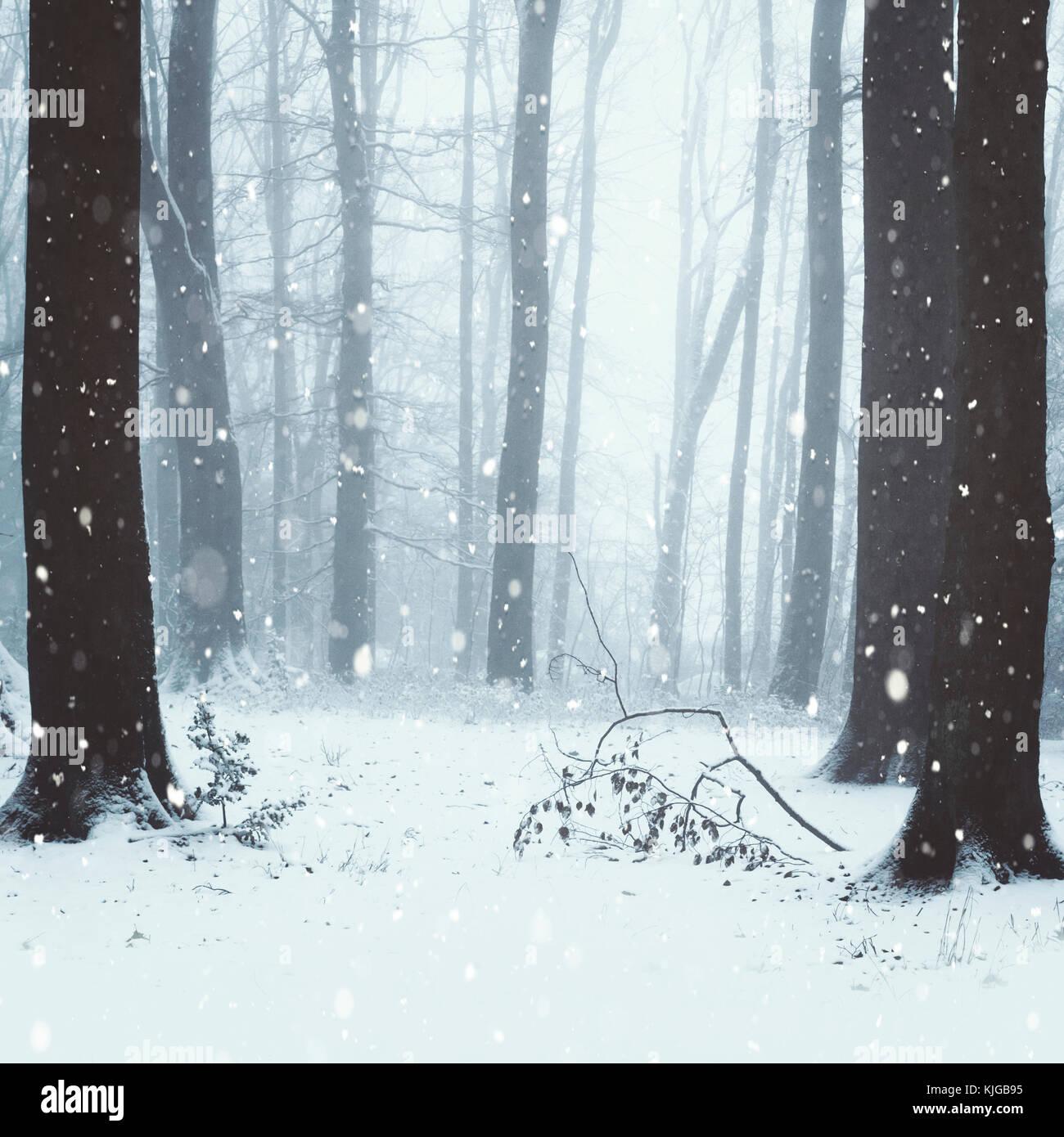 Schneetreiben in Laubwald, Wuppertal, Deutschland - Stock Image