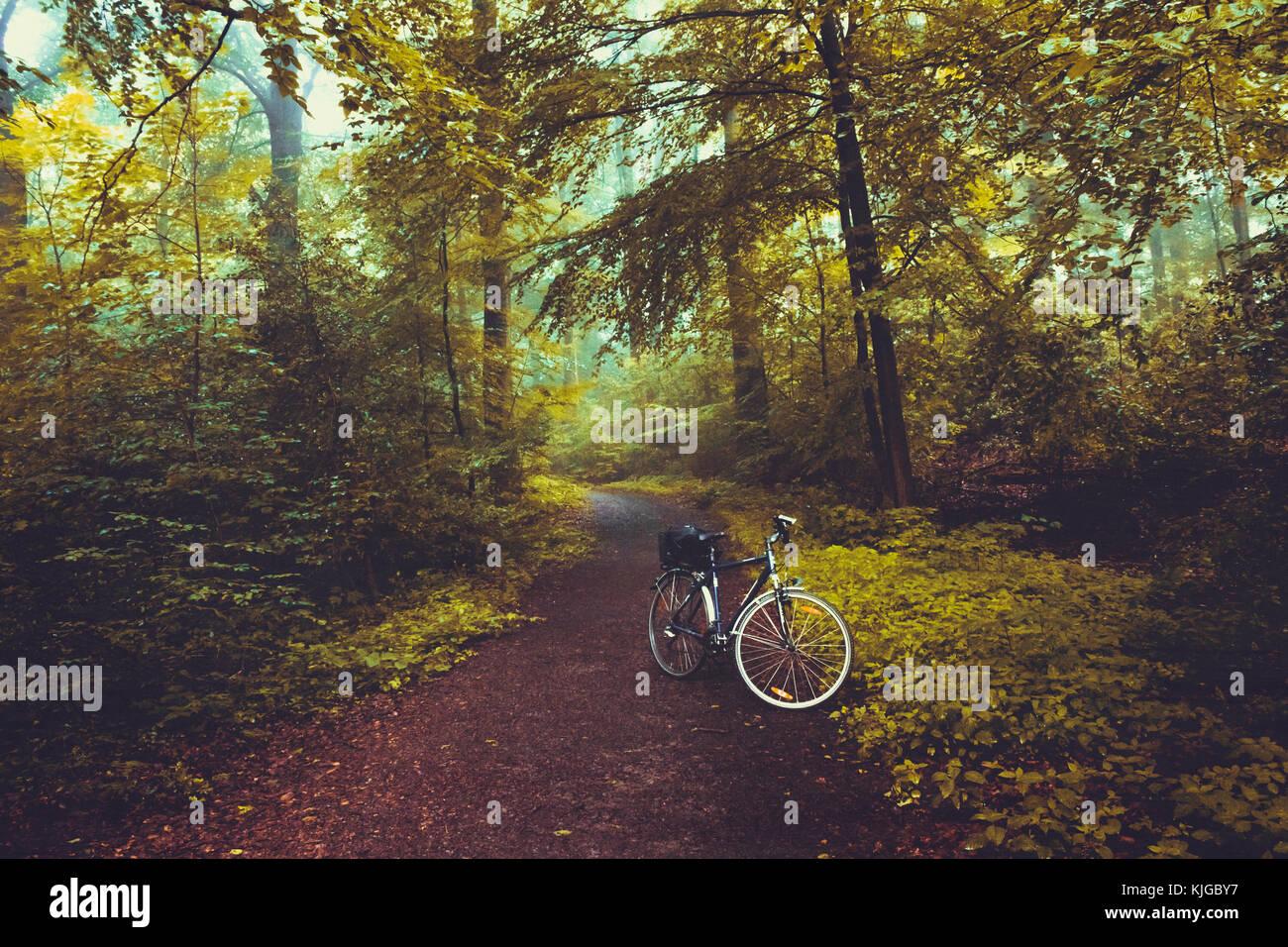 Fahrrad auf Waldweg, Wuppertal, Deutschland Stock Photo