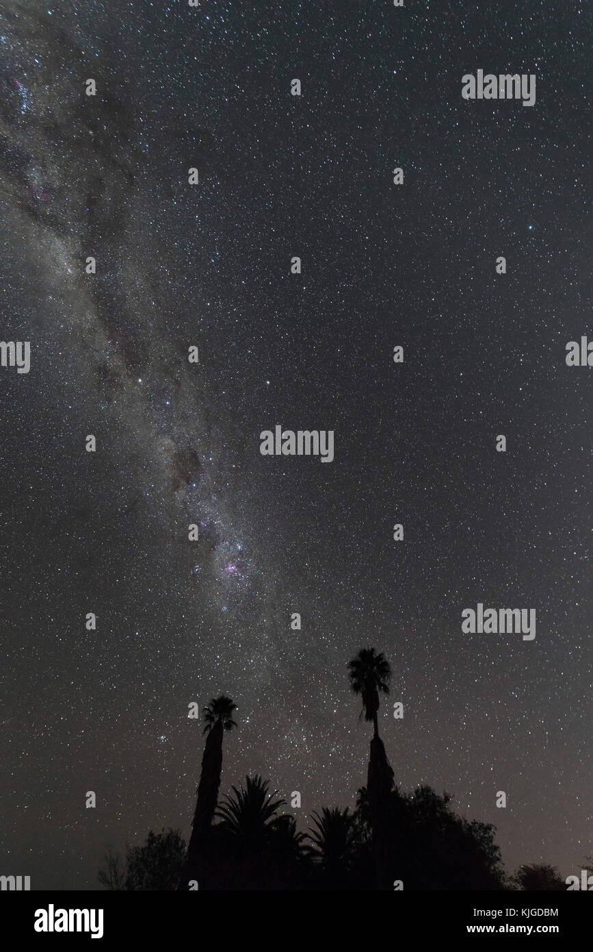 Namibia, Region Khomas, near Uhlenhorst, Astrophoto, Band of southern Milky Way with palm trees in foreground - Stock Image