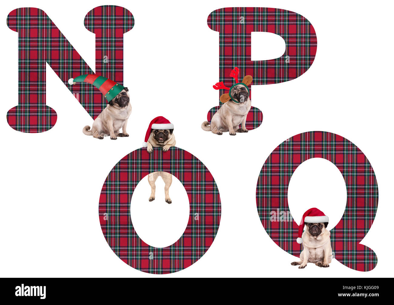 cute Christmas pug puppy dog alphabet letters N P O Q, isolated on white background - Stock Image
