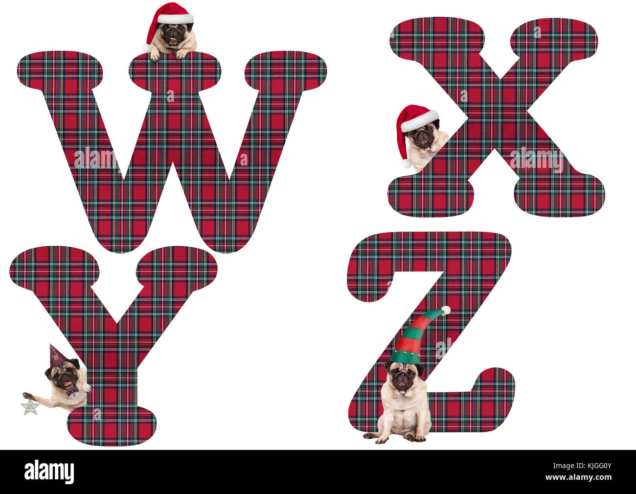 cute Christmas pug puppy dog alphabet letters W X Y Z, isolated on white background - Stock Image