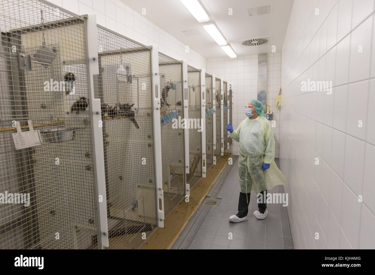 Muenster, Germany. 24th Nov, 2017. Prof. Dr. Stefan Schlatt from the Medical Faculty stands in front of a cage with - Stock Image