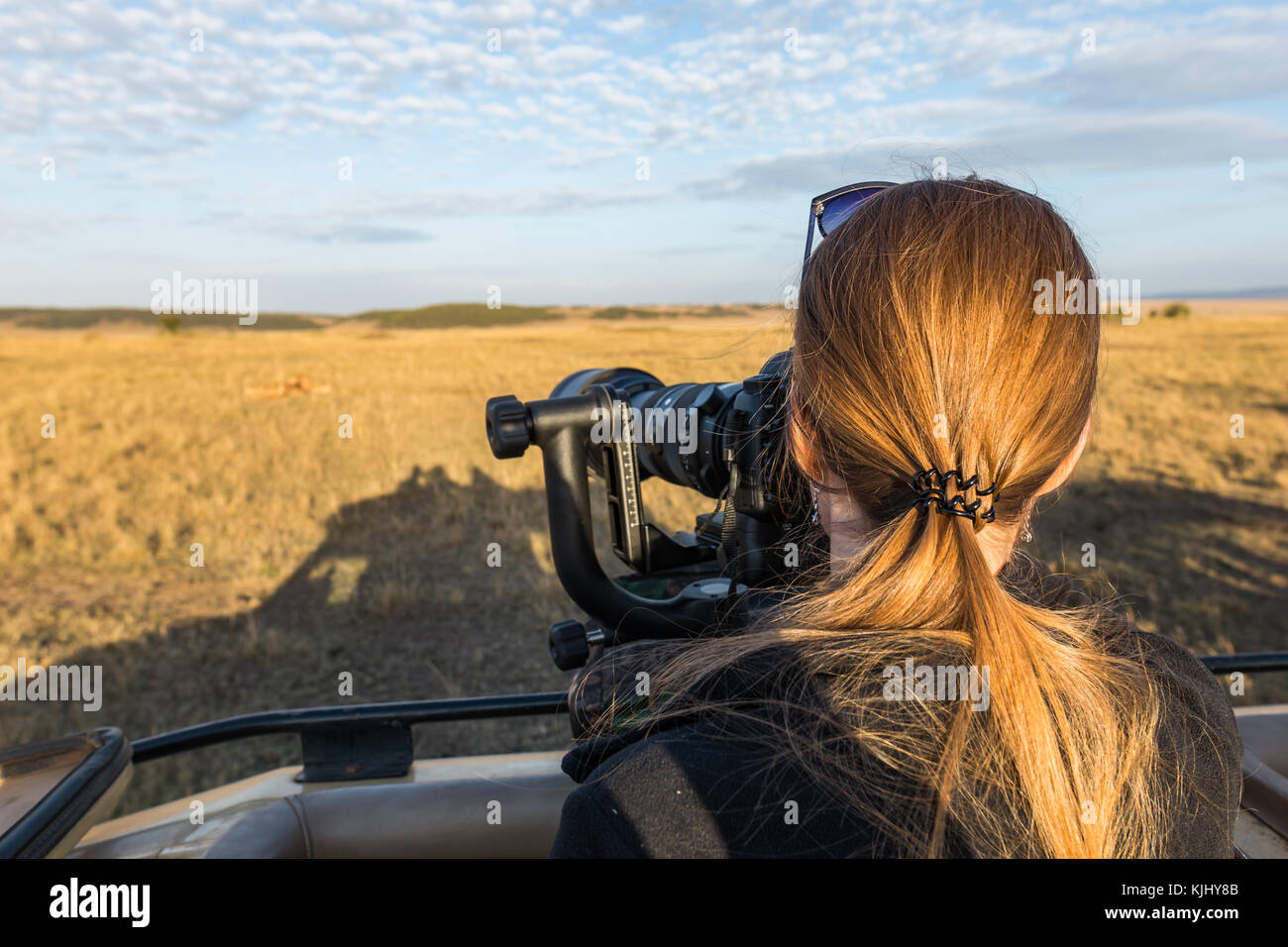 Courageous girl taking pictures of pride of lions eating wildebeest while on safari game drive with big camera, - Stock Image