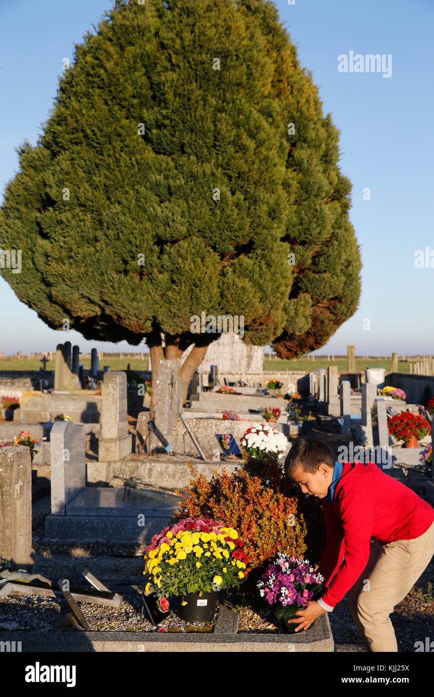 Boy placing flowers on a grave. France. - Stock Image