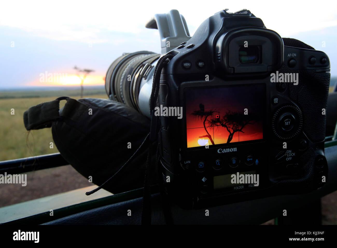 Safari photo. Canon EOS1DX camera.  Masai Mara game reserve. Kenya. - Stock Image