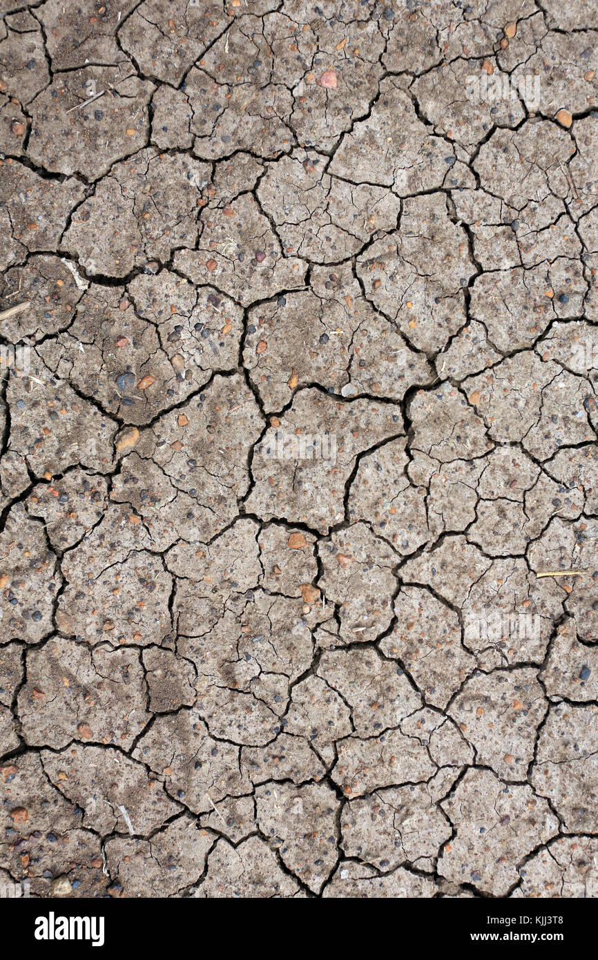 Dry cracked ground.  Cracked, dry earth.  Masai Mara game reserve. Kenya. - Stock Image