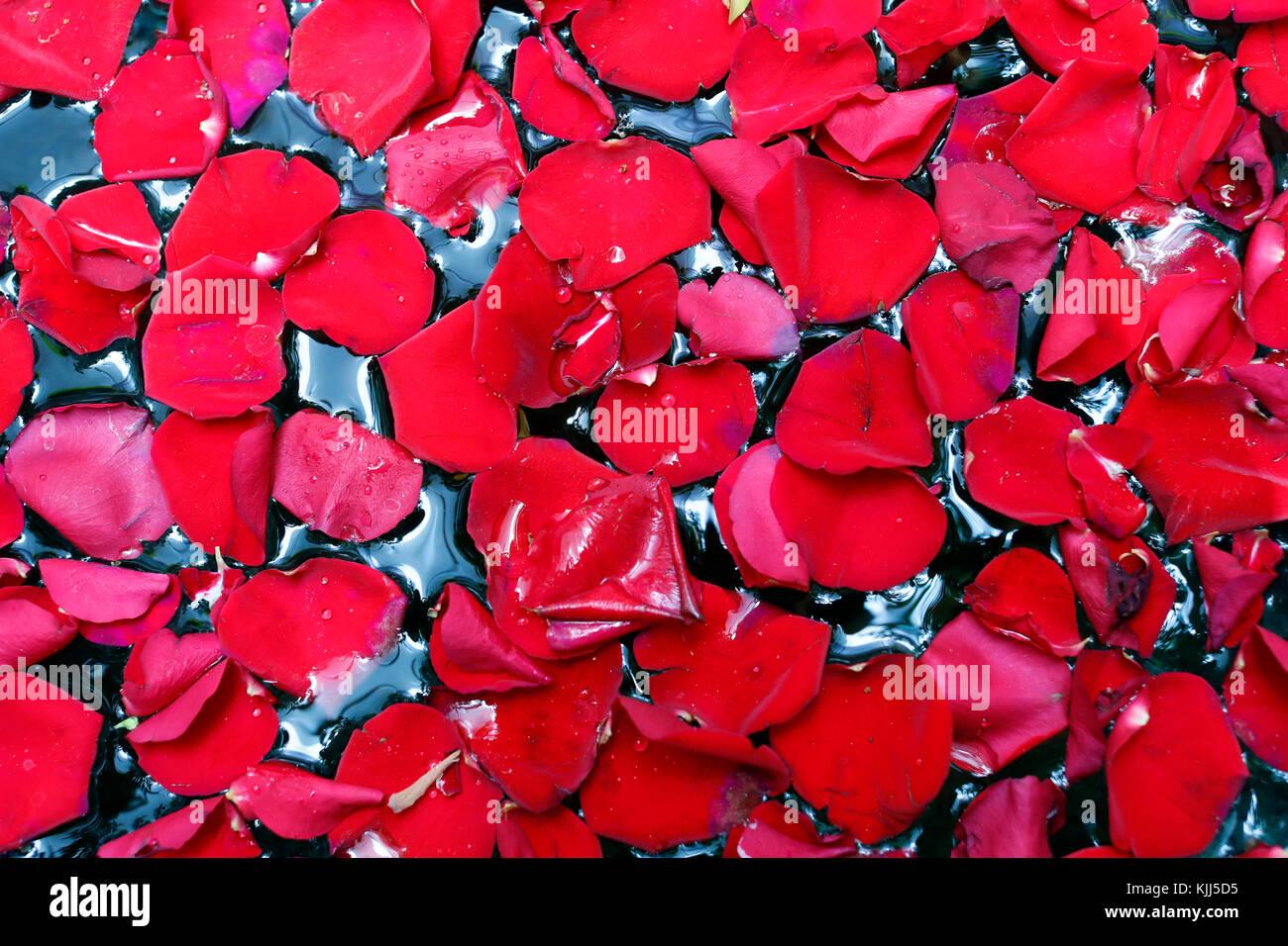 Detail shot of red rose petals. Vung Tau. Vietnam. - Stock Image
