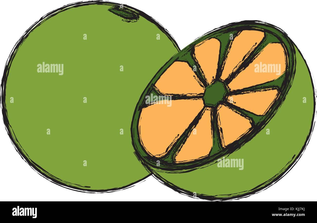 Lemon Citrus Fruit Color Draw Stock Photos & Lemon Citrus Fruit ...