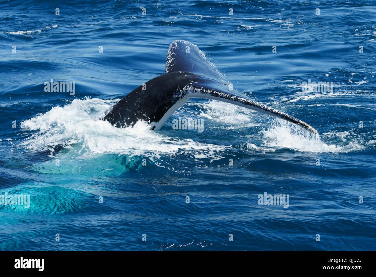 Whales, Brisbane, Australia, Lifestyle Travel, Blue sky, ocean, close-up - Stock Image