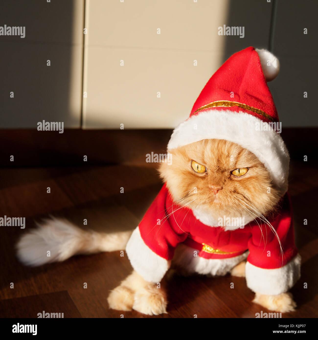Santa Claus Cat - Stock Image