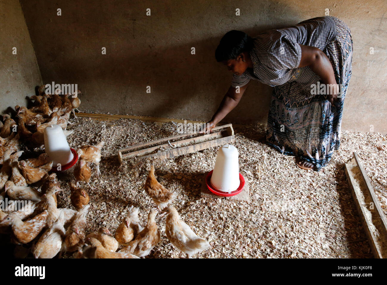Cattle and poultry breeder Margret Isingoma received a 7 million UGS loan from ENCOT microfinance. Uganda - Stock Image