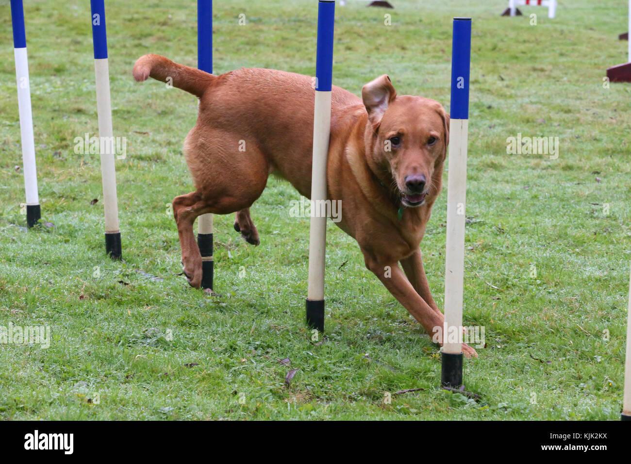 dod agility - Stock Image