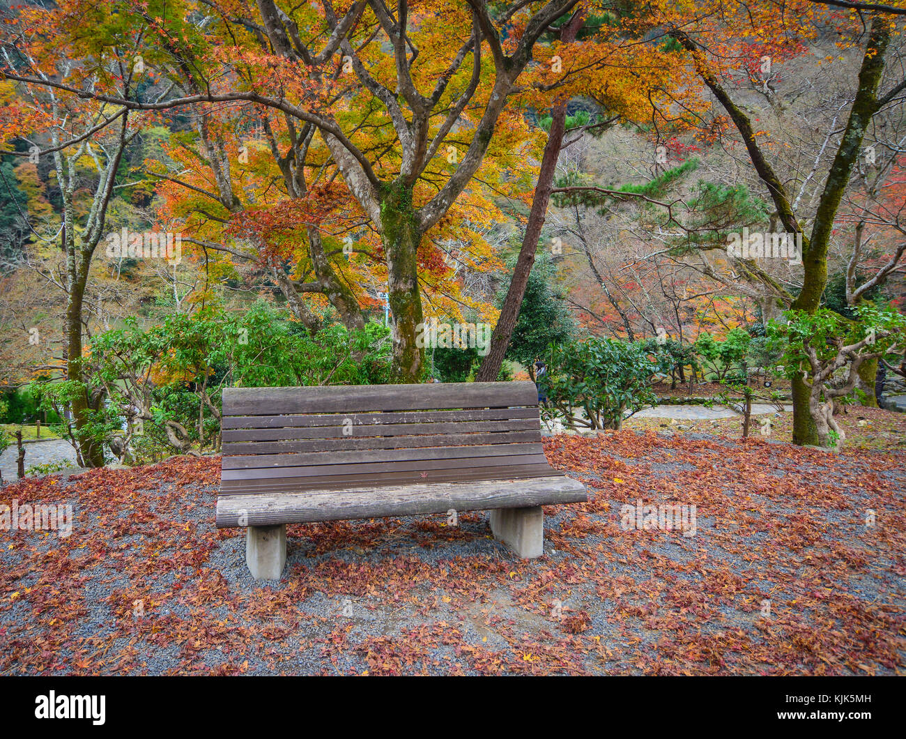 Groovy Bench Japanese Maple In Garden Stock Photos Bench Japanese Andrewgaddart Wooden Chair Designs For Living Room Andrewgaddartcom