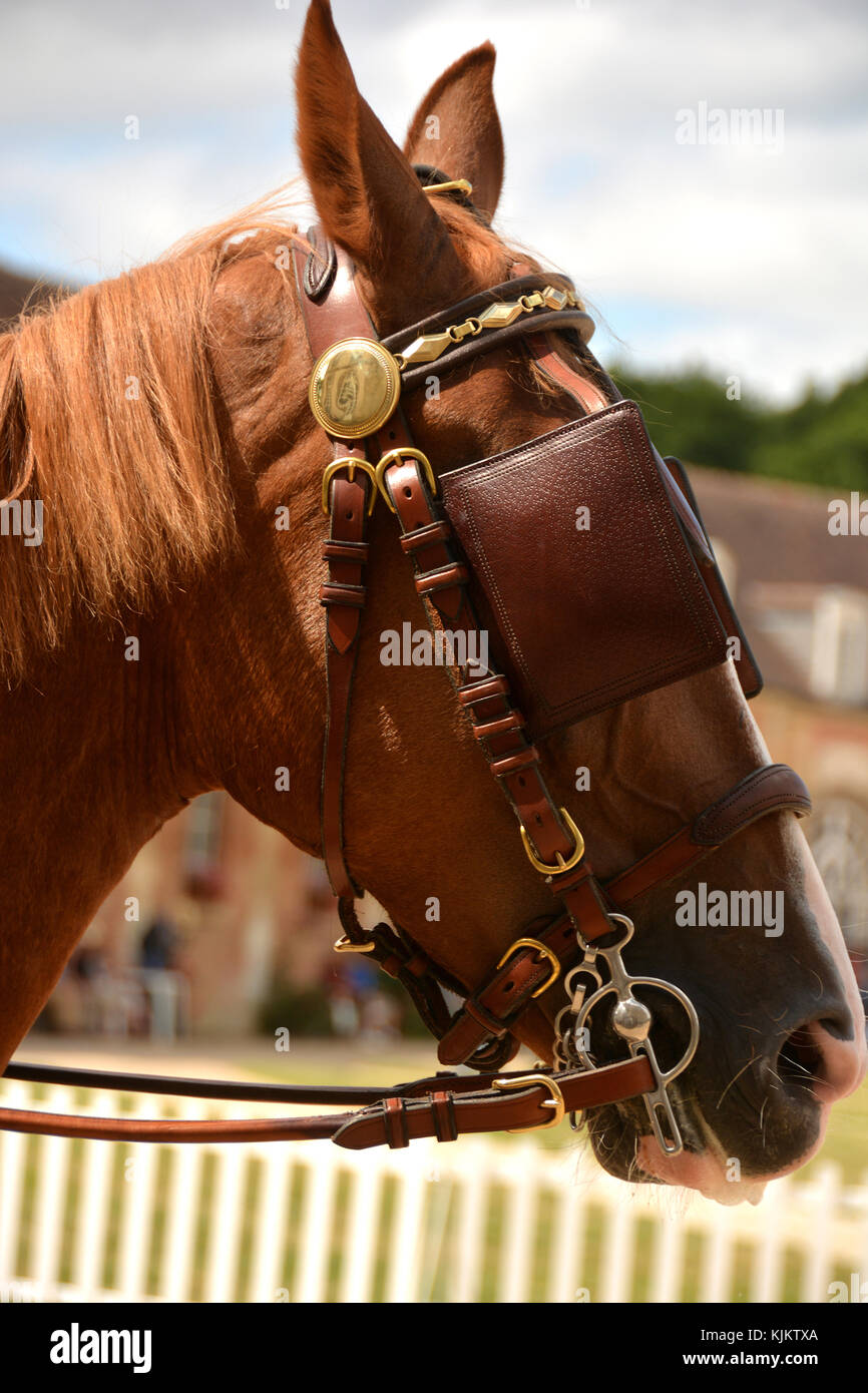 Haras (stud farm) national du Pin, created in 1715. Concours international d'attelage. France. Stock Photo