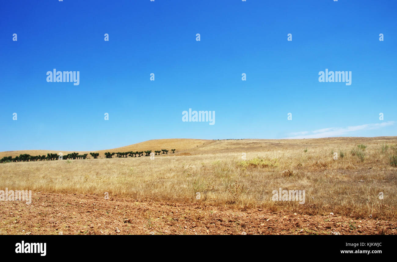 Panoramic landscape field, Alentejo, Portugal Stock Photo
