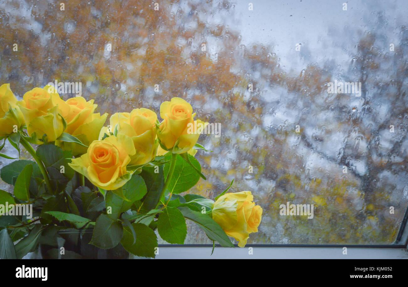 Rainy Sunday Morning Stock Photo 166396302 Alamy