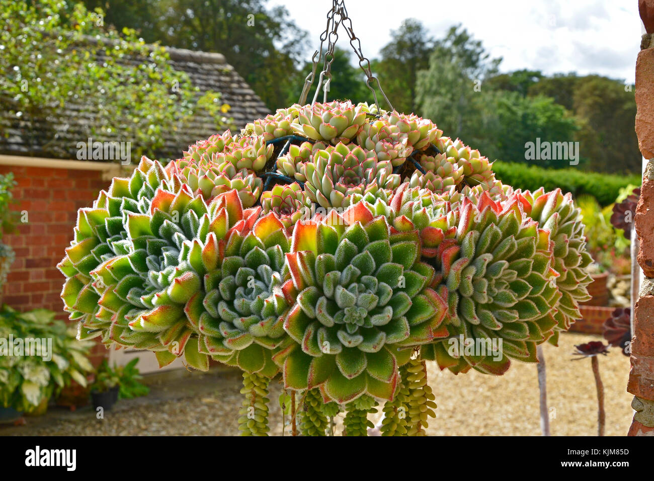 A garden hanging basket containing a display of succulents and a garden hanging basket containing a display of succulents and cactus workwithnaturefo