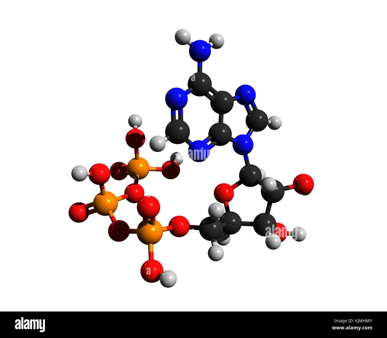 Molecular structure of adenosine triphosphate (ATP), a complex organic chemical, 3D rendering Stock Photo