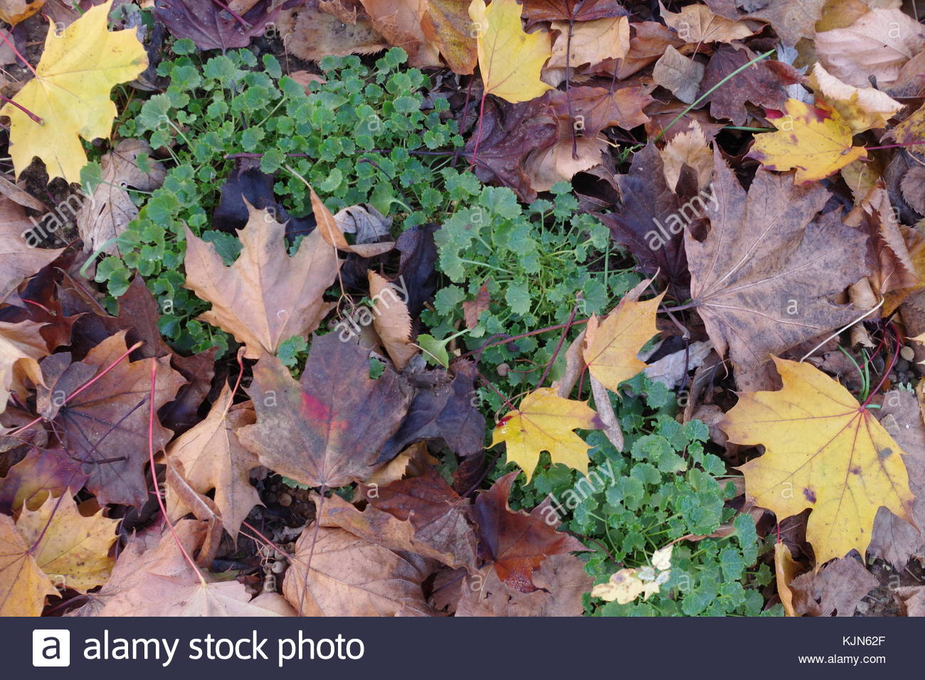 Contrasting Leaves - Stock Image