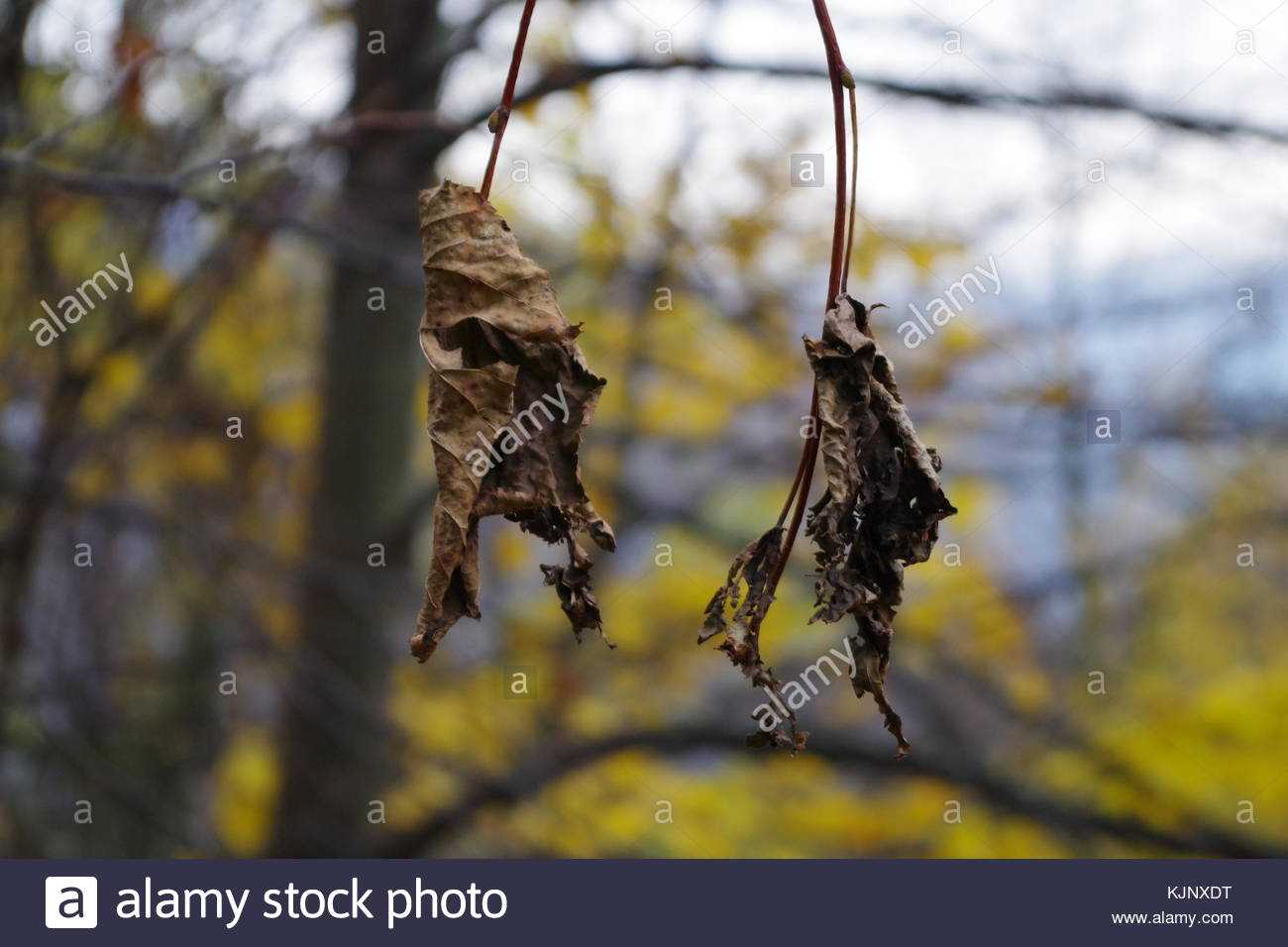 Dead Leaves of Autumn - Stock Image
