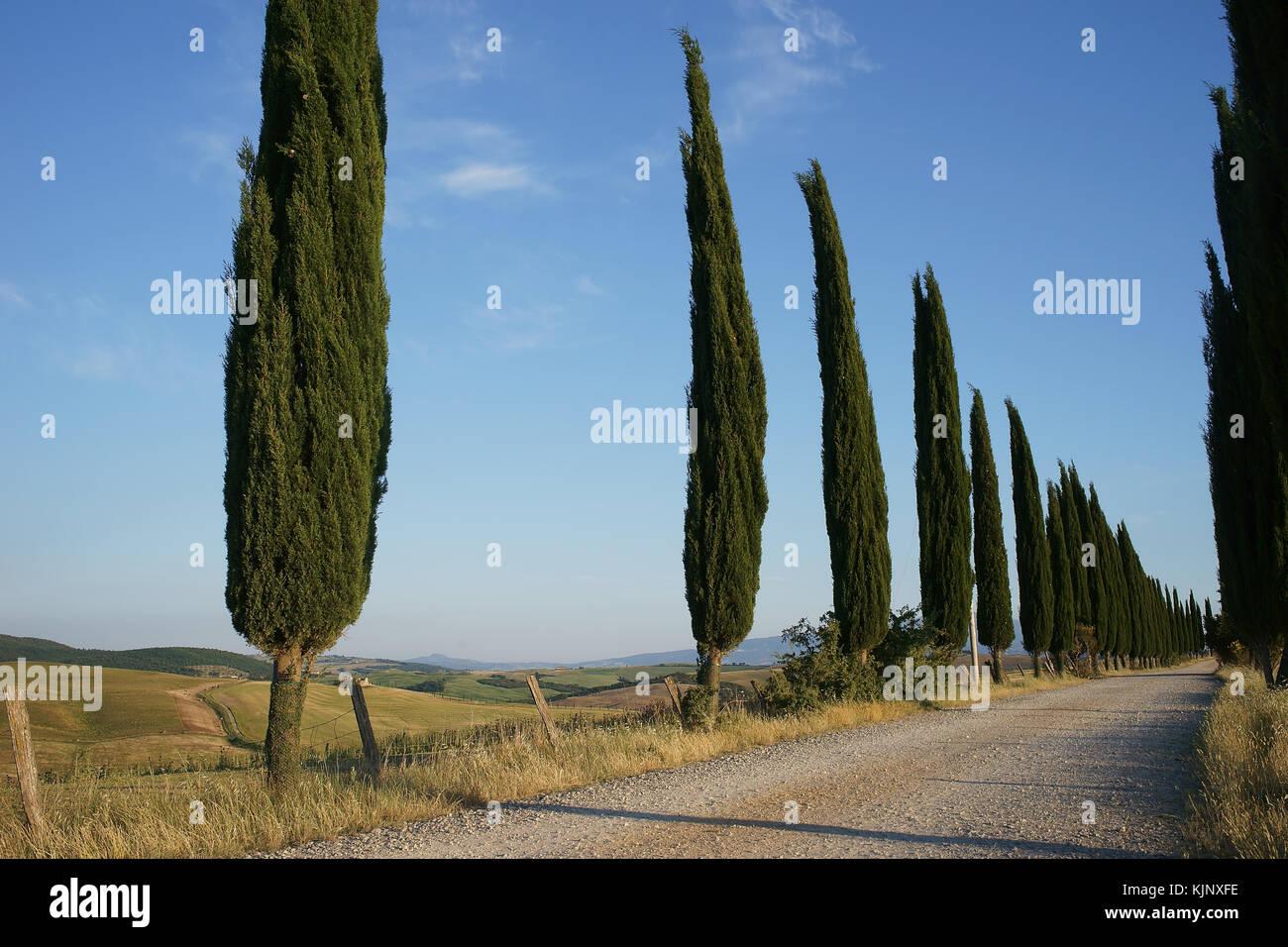 Street betwin Montisi and San Giovanni D'Asso, Crete senesi, Tuscany, italy - Stock Image
