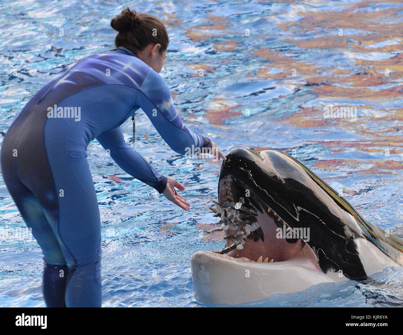 ORLANDO, FL - MARCH 19: Surrendering Thursday to a profound shift in how people feel about using animals for entertainment, - Stock Image