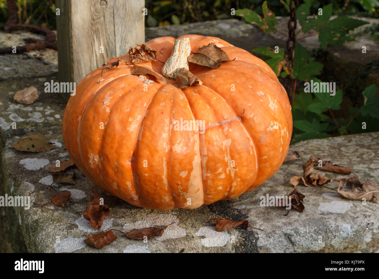 Pumpkin and dead leaves on the coping of a well in a garden during autumn - Stock Image