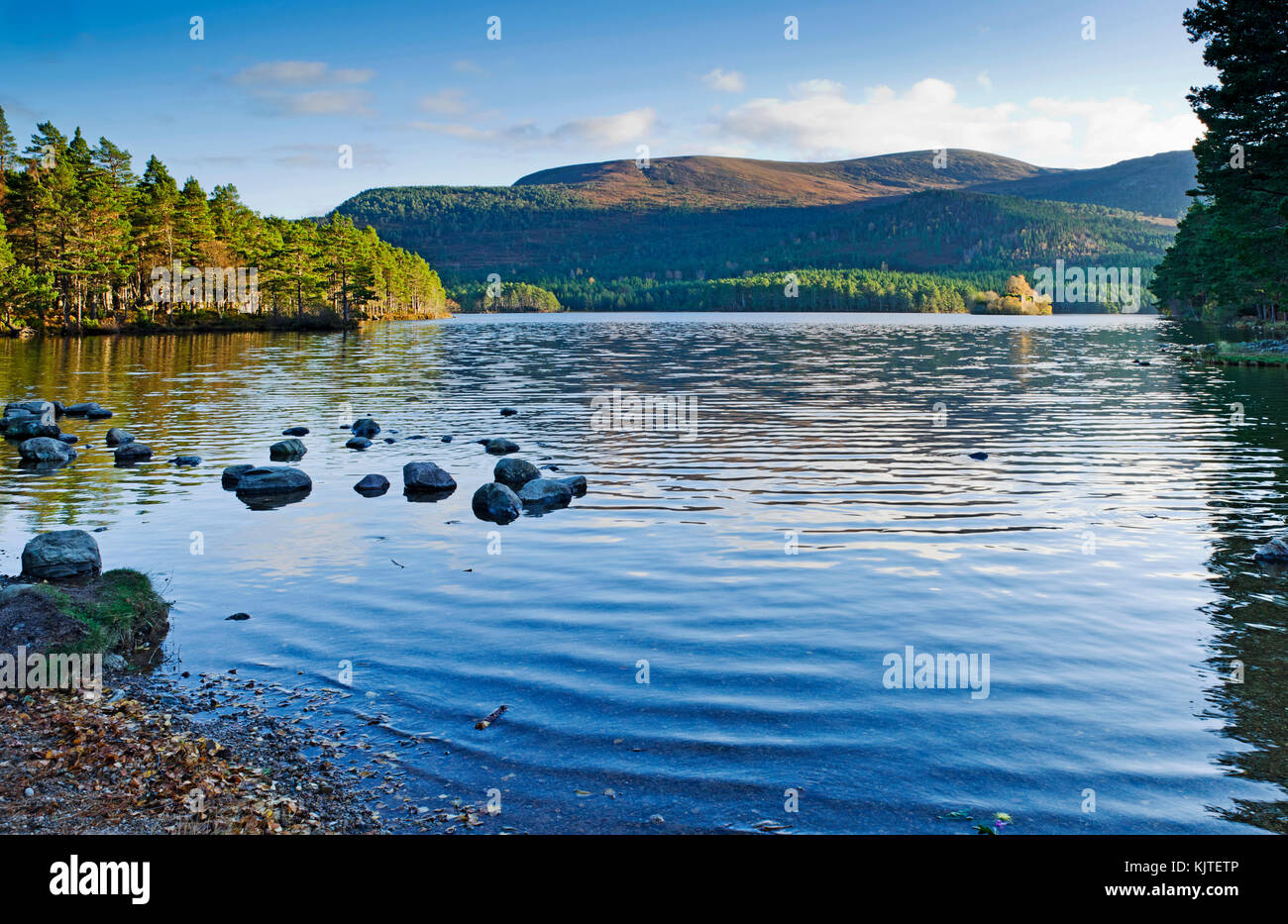 Loch an Eilein, Rothiemurchus, Cairngorms, Scottish Highlands, autumn, the island with ruined castle in the distance - Stock Image