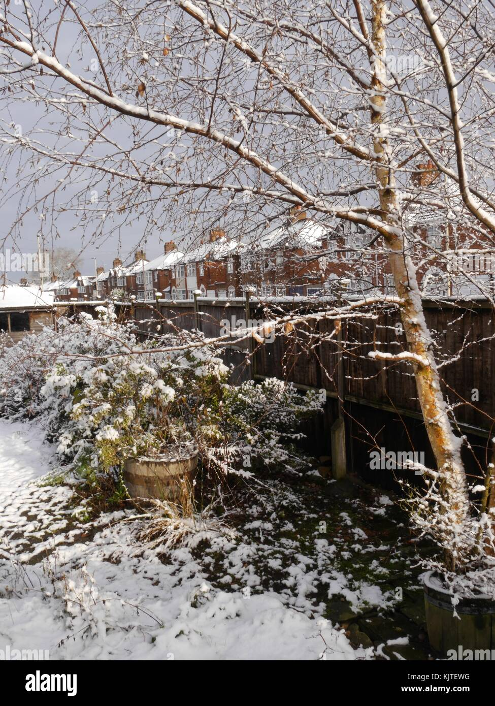 Snow-covered garden in suburb of city of Leicester in English Midlands with lovely snowy tree on the right and a - Stock Image