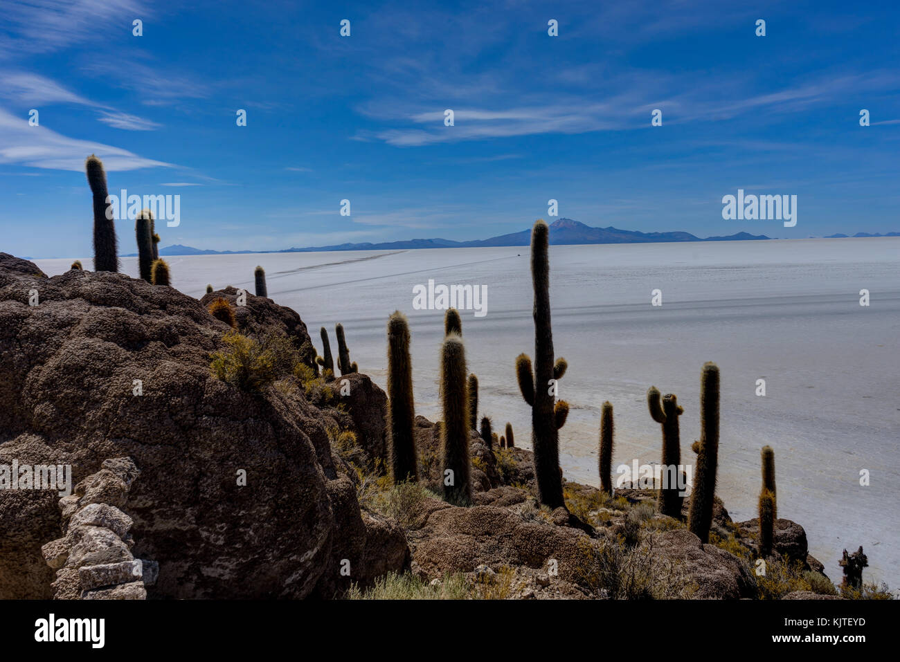 Photo taken in August 2017 in Uyuni Bolivia, South America: Isla Incahuasi in Salar de Uyuni cactus Island. Salar Stock Photo