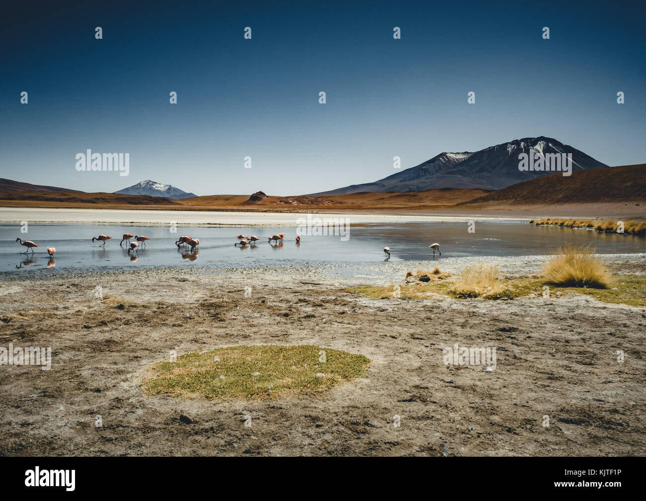 Photo taken in August 2017 in Altiplano Bolivia, South America: Flamingos at Laguna Canapa Altiplano Bolivia Salar - Stock Image