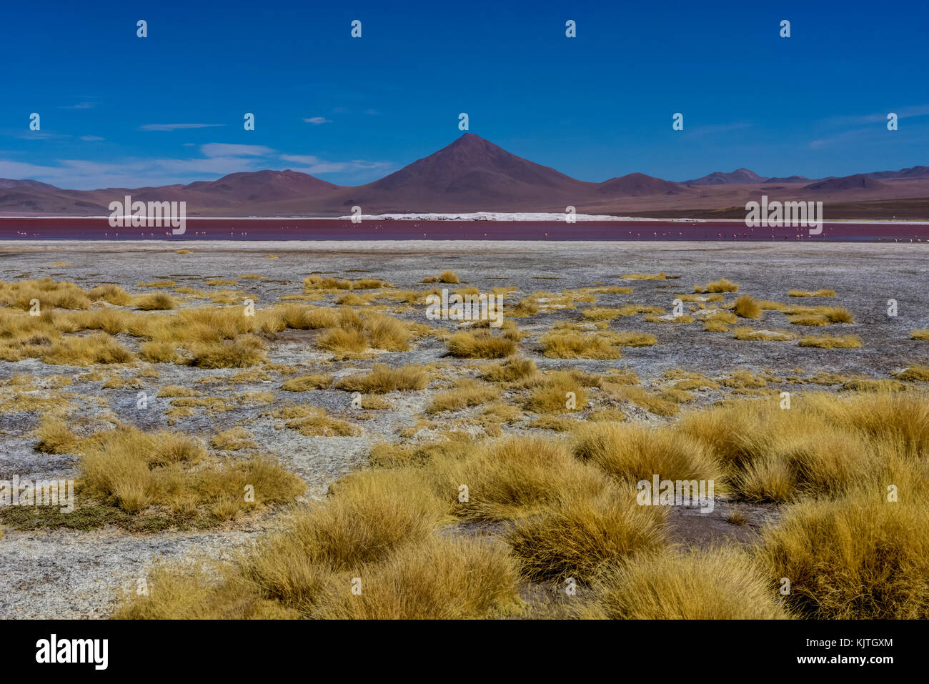 Photo taken in August 2017 in Altiplano Bolivia, South America: Pink Flamingos at Laguna Colorada Altiplano Bolivia Stock Photo
