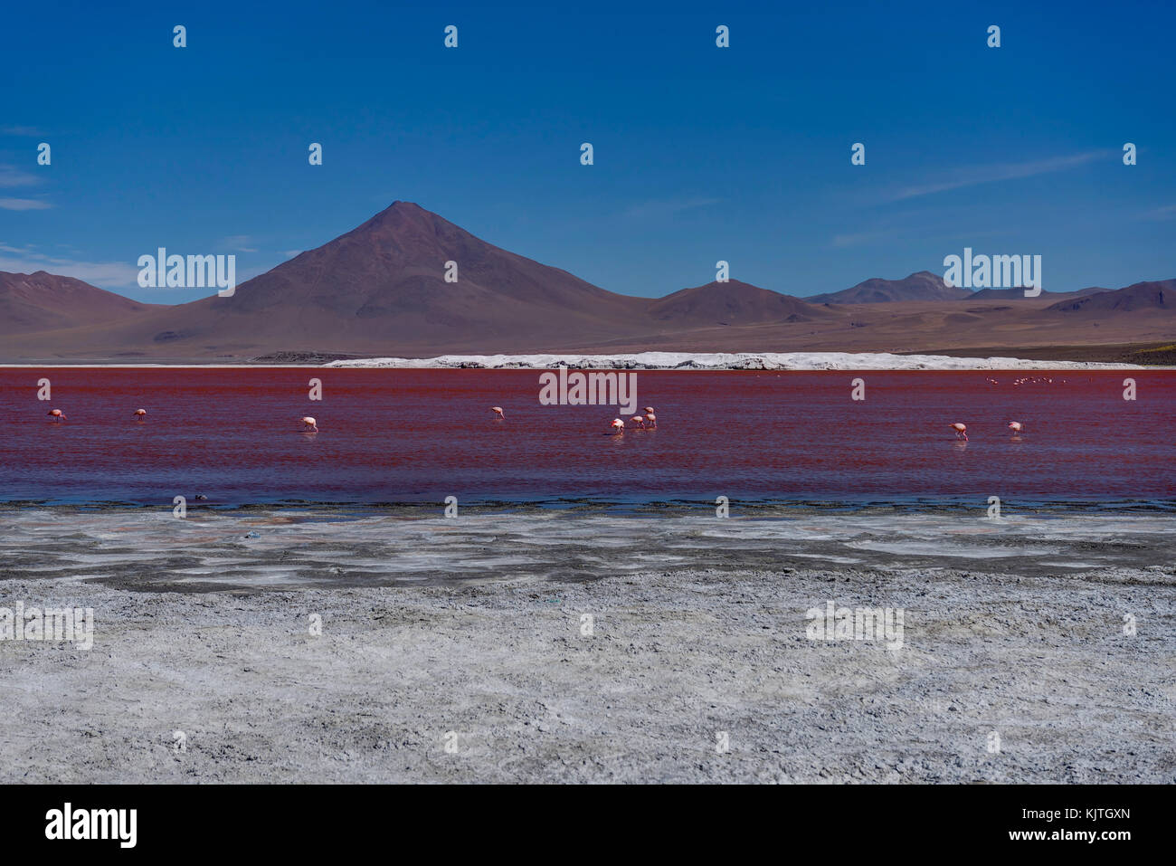 Photo taken in August 2017 in Altiplano Bolivia, South America: Pink Flamingos at Laguna Colorada Altiplano Bolivia - Stock Image
