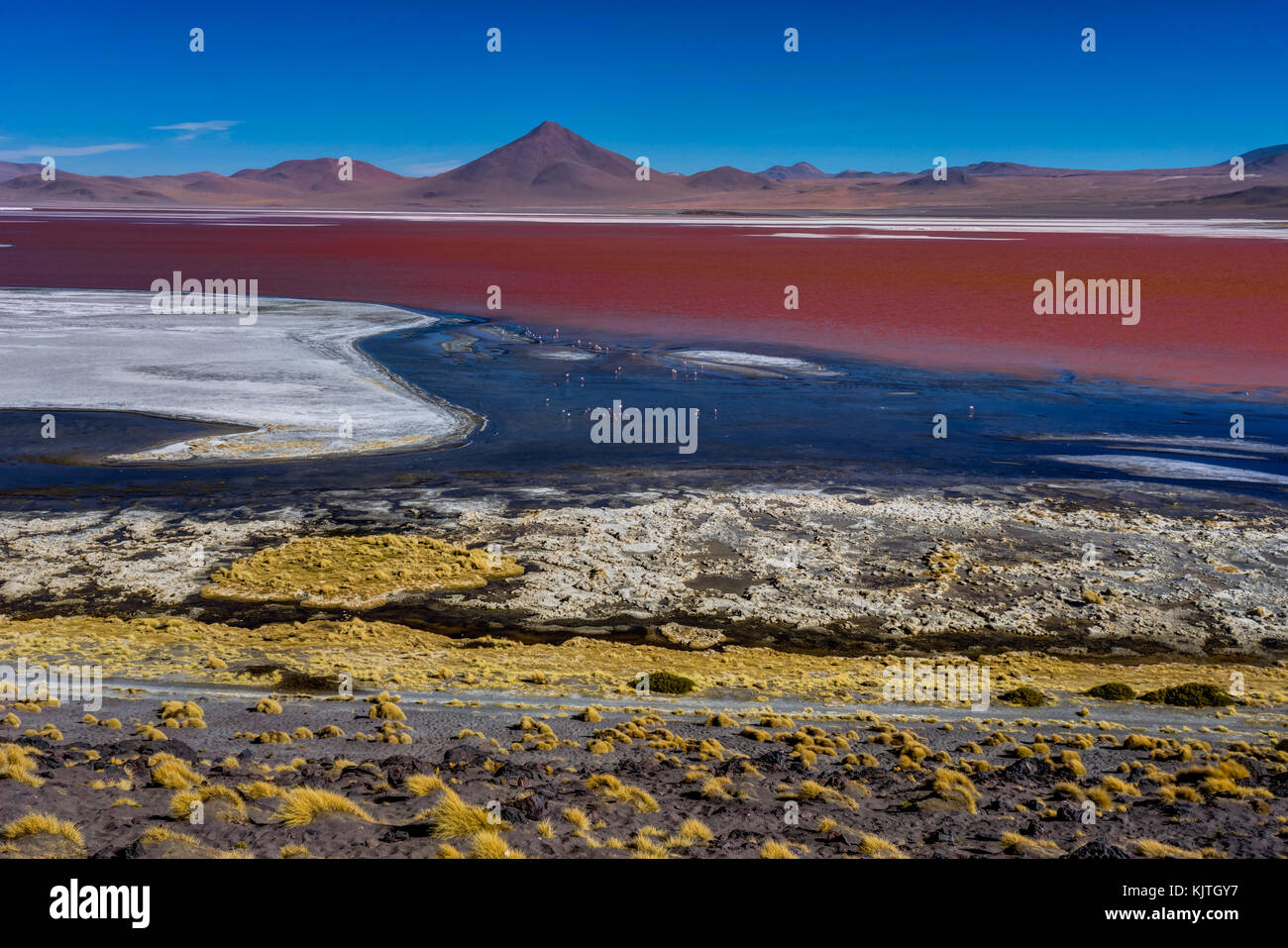 Photo taken in August 2017 in Altiplano Bolivia, South America: Pink Flamingos at Laguna Colorada Altiplano Bolivia - Stock Image
