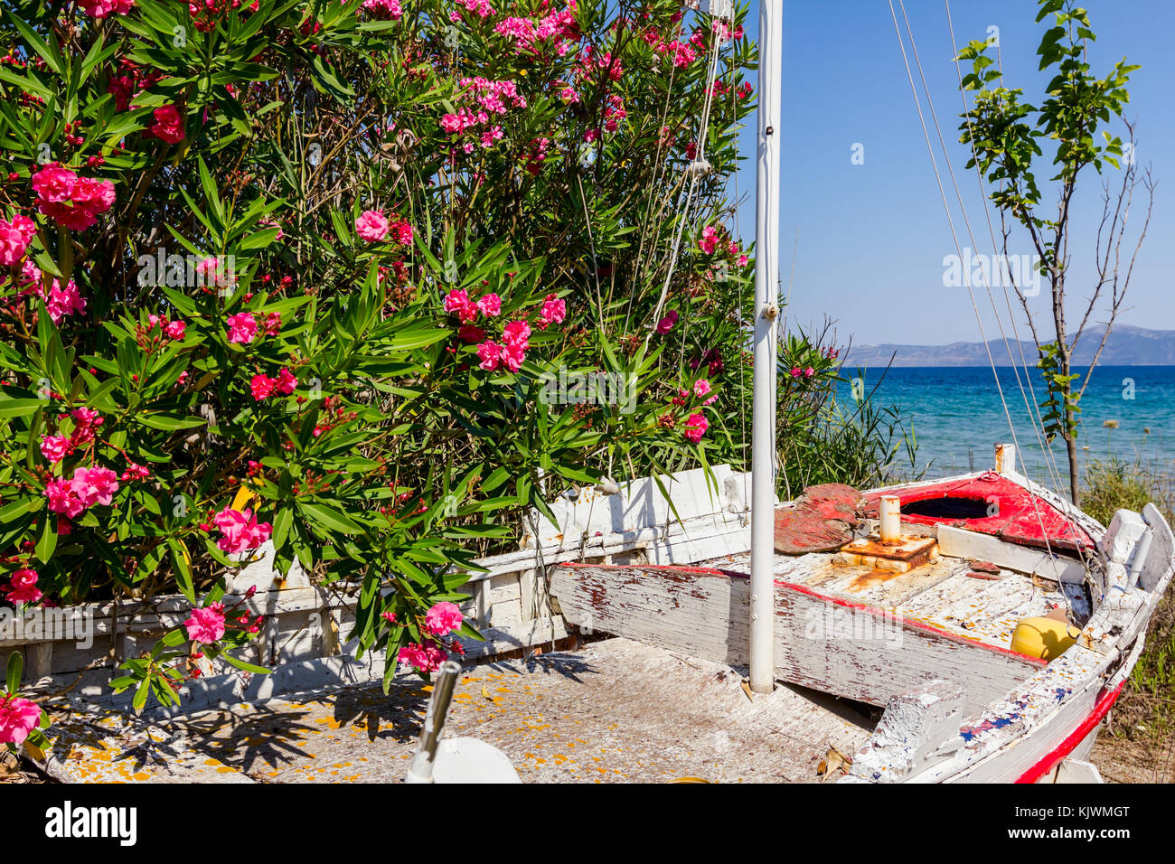 Overgrown in weed, old wooden sailboat is dry docked, withdrawn to the beach. - Stock Image