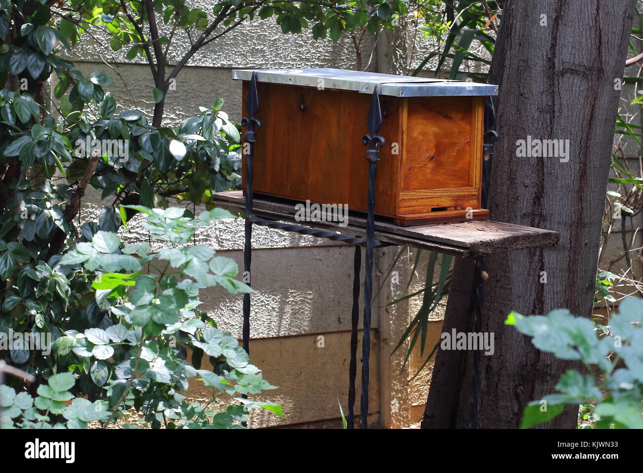 A swarm trap or a bait hive for honey bees in a residential garden in landscape format - Stock Image