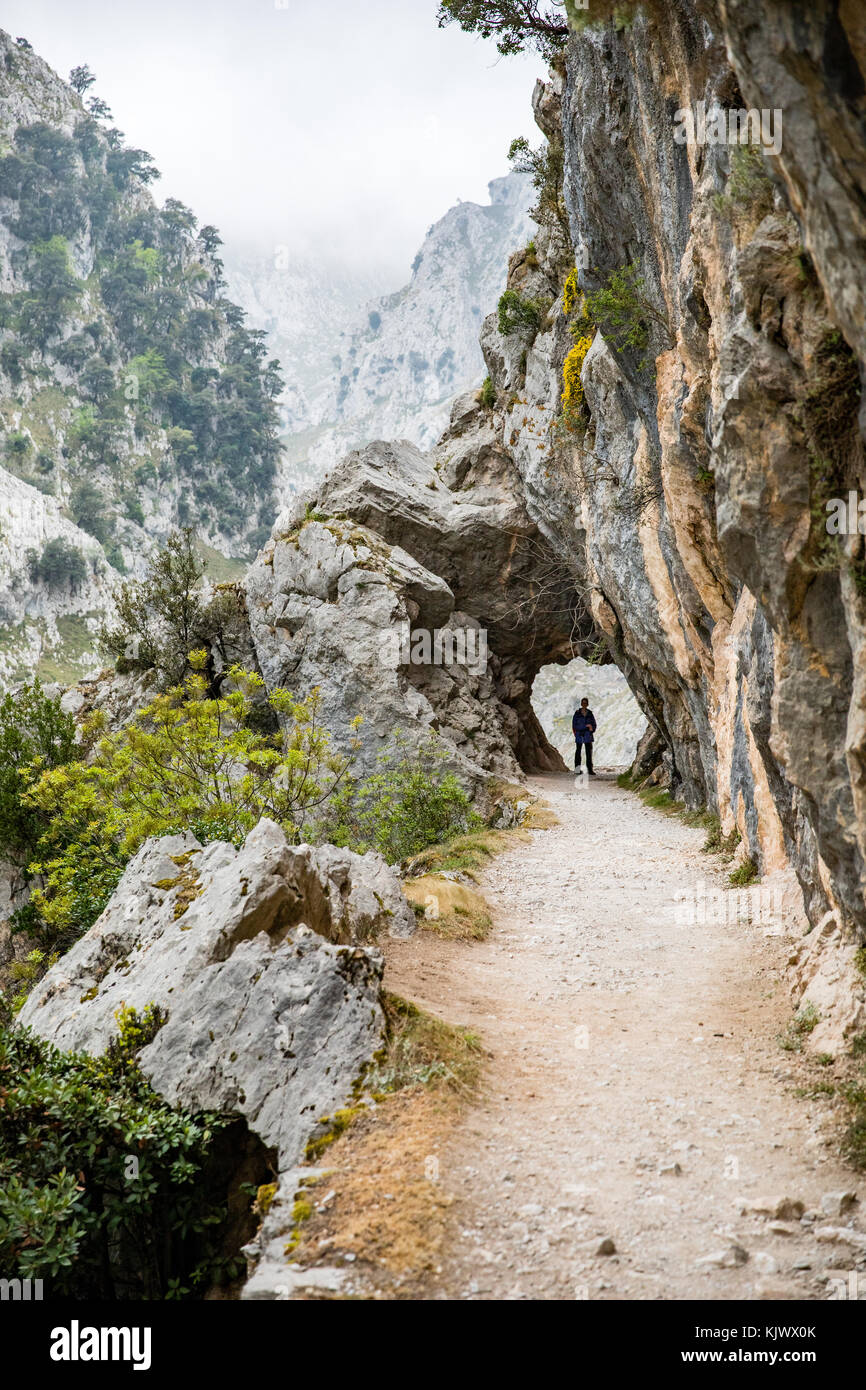 Walking in the Cares Gorge a deep and dramatic canyon running through  the Picos de Europa in northern Spain - Stock Image