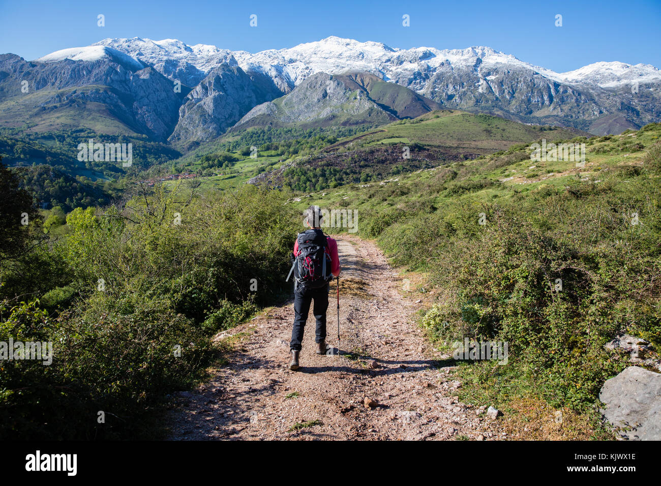 A female hiker walking on a track in the foothills of the Picos de Europa near Pandielo in northern Spian - Stock Image