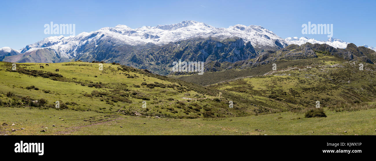 High grassland with horses between Pandielo and Bobia in the Picos de Europa in Catalonia northern Spain - Stock Image