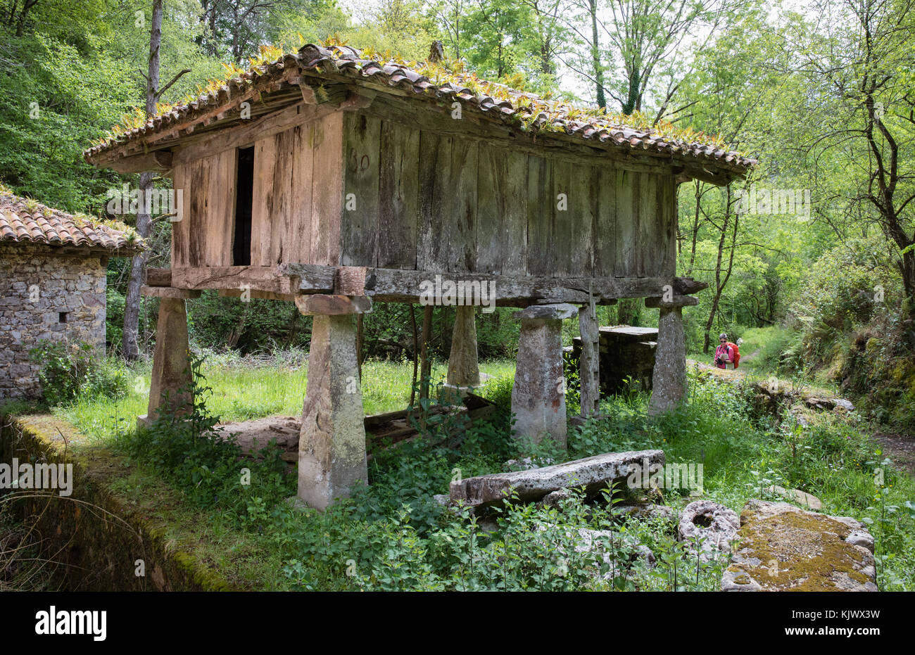 Asturian raised granary or Oriel near Mestas in the foothills of the Picos de Europa in northern Spain - Stock Image