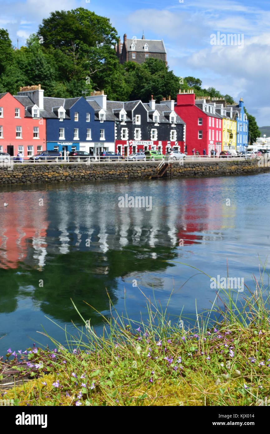 Delicate flowers and colourful cottages in Tobermory, Scotland - Stock Image