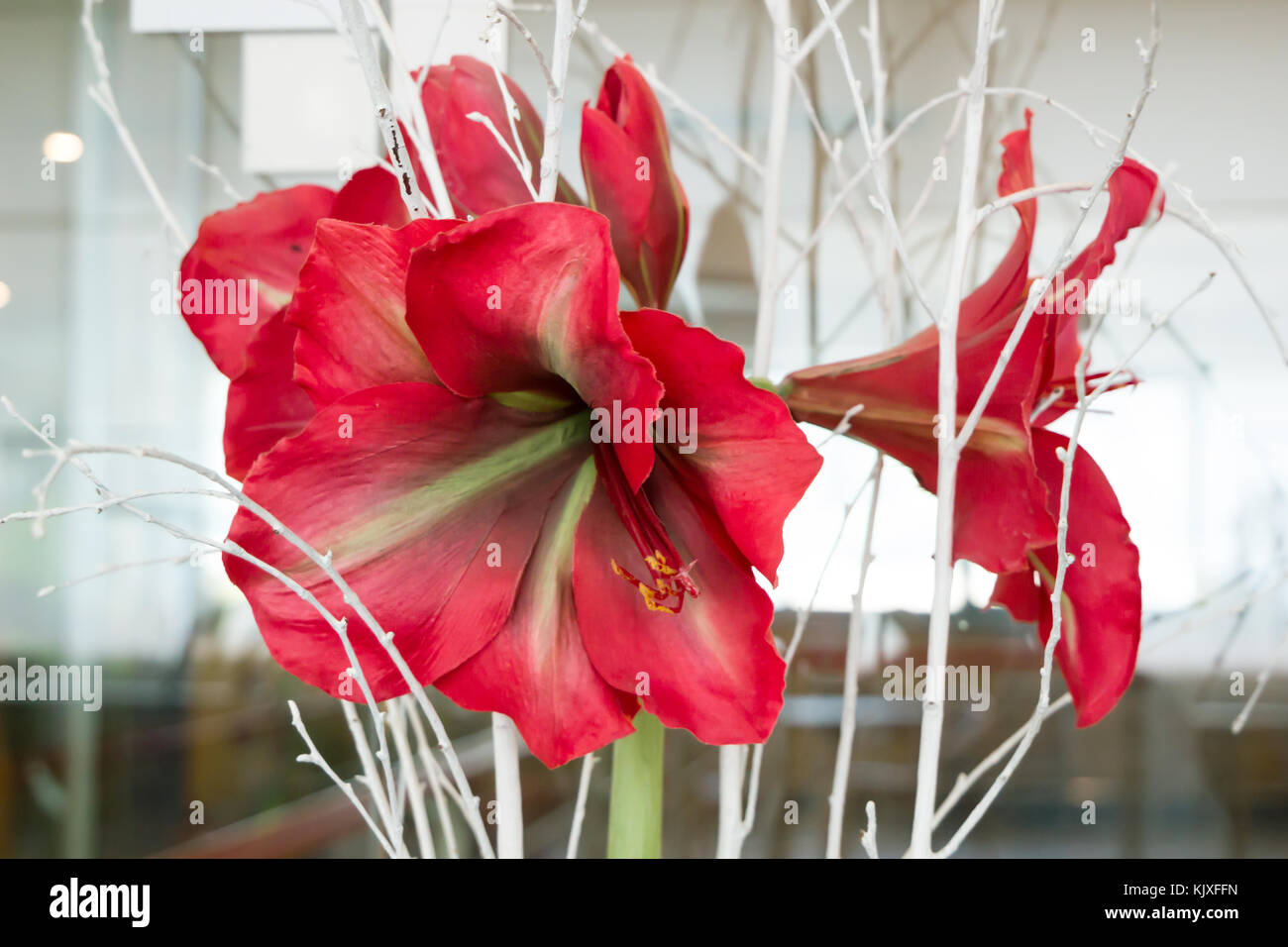 Hawaiian vintage art stock photos hawaiian vintage art stock beautiful flower close up of red hibiscus flower with dry branches in vase background izmirmasajfo Gallery