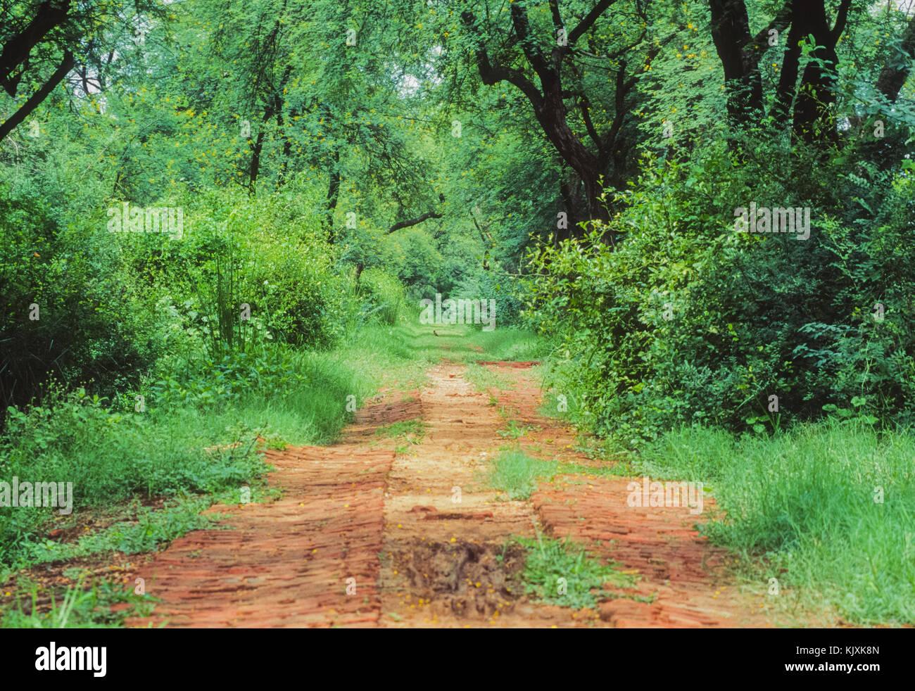 footpath in Keoladeo Ghana National Park or Bharatpur Bird Sanctuary, Bharatpur, Rajasthan, India Stock Photo