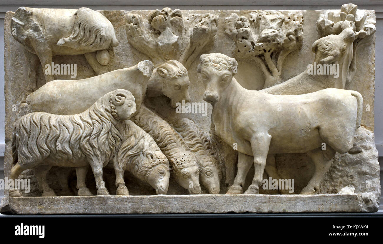 Flock of sheep and oxen, from a group of announcements to pastors, 1296-1300 Arnolfo di Cambio 1240 – 1300/1310,( - Stock Image