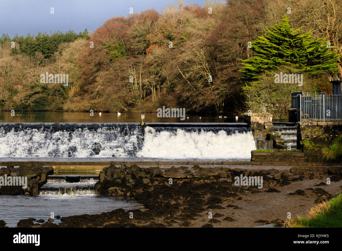 Lopwell Dam on the River Tavy, Devon, UK, in late Autumn sunshine and showing the upper and lower fish ladders Stock Photo